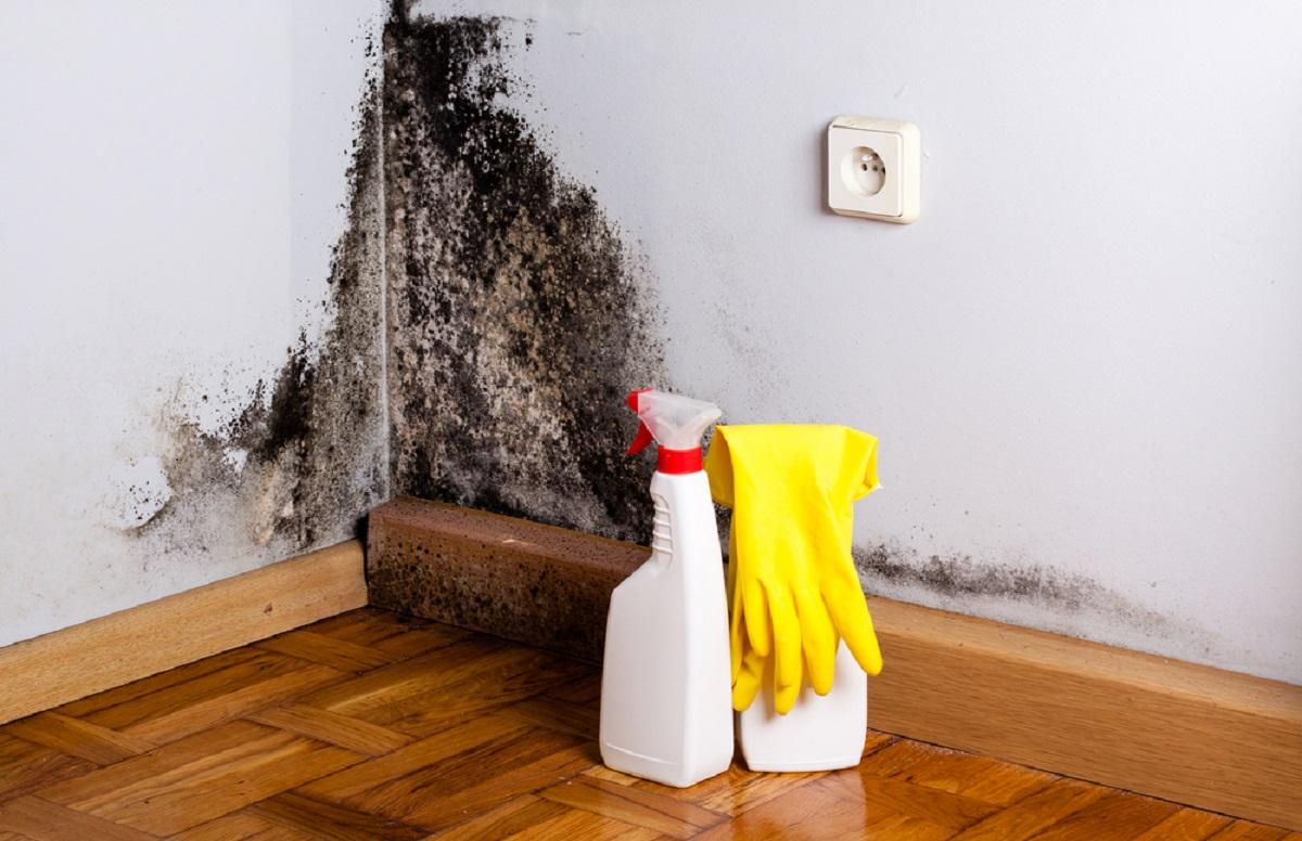 Jak se zbavit plísně na zdi?